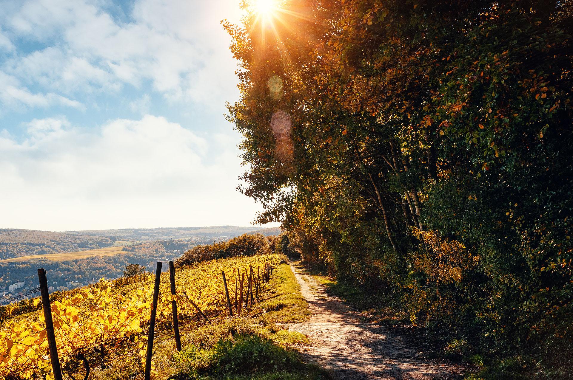 Weinberg Deutschland Herbst