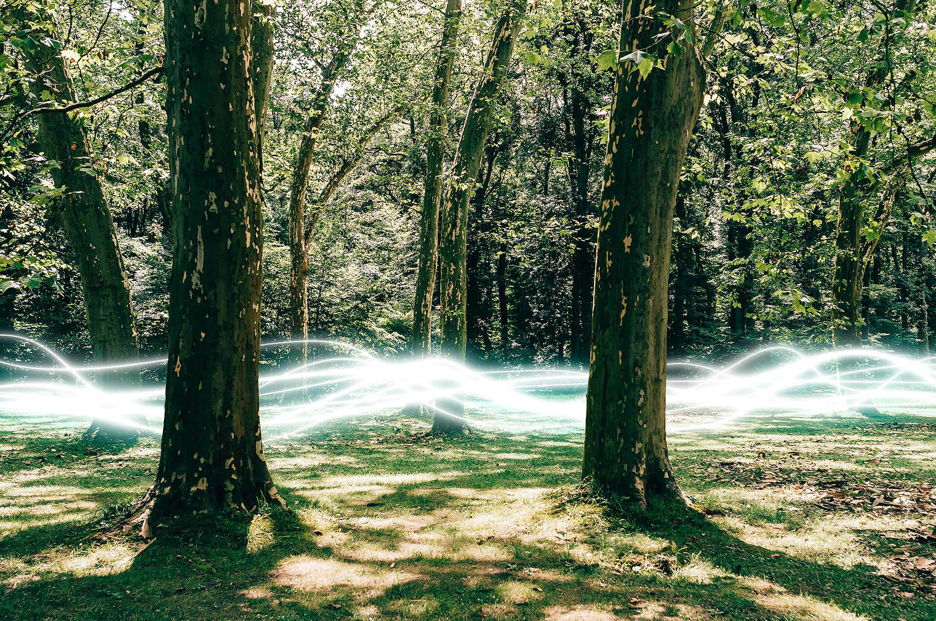 Wald mit Energy Illustration